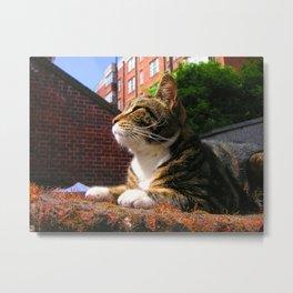 Sunbathing Cat Metal Print