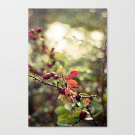 Autumn Glow I Canvas Print
