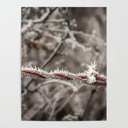 Frosty Barbed Wire Poster