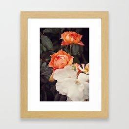 Roses III Framed Art Print