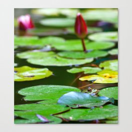 Pond with frog Canvas Print