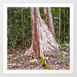 Buttress root in the rainforest Art Print