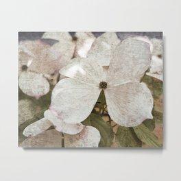 Vintage White Flowering Dogwood Metal Print