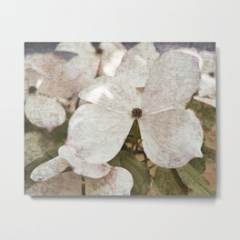 Vintage White Flowering Dogwood Metal Print