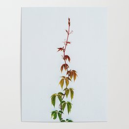 LEAVES IN THE HOUSE Poster