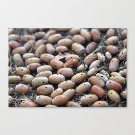 Acorns with Holes No.4 Canvas Print