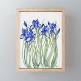 Blue Iris, Illustration Framed Mini Art Print