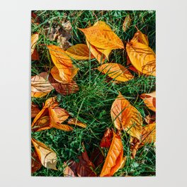 Orange Autumn Leaves Background In Fall Season, Autumn Season, Fall Background, Falling Leaves, Art Poster