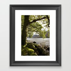Oak tree on the shore of Buttermere with Haystacks beyond. Lake District, Cumbria, UK Framed Art Print