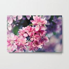 Crabapple Blooms Metal Print