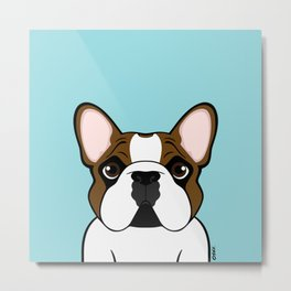 Frenchie - Fawn Pied Metal Print