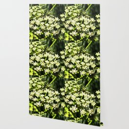 Succulent White and Green Flowers Wallpaper