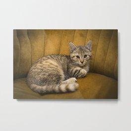 Cinnamon Tabby Kitten Metal Print