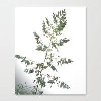 grace Canvas Prints featuring GRACE by Teresa Chipperfield Studios