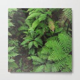 New Zealand ferns Metal Print