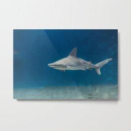 The shark Metal Print