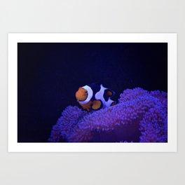 Clownfish at Home Art Print