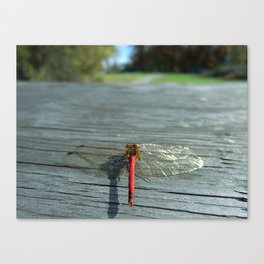 Dragon Fly Ready for Take Off Canvas Print