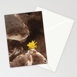 Otterly Cute Flower Power Stationery Cards