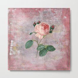 Vintage & Shabby Chic - Rose on pink grunge background  - Roses and flowers garden Metal Print