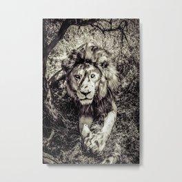 Mufasa stares back Metal Print