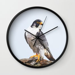 Majestic: Peregrine Falcon Wall Clock