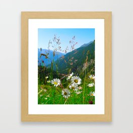 Camomiles in the Alps Framed Art Print