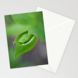 Fresh Stationery Cards