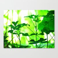 clover Canvas Prints featuring Clover by Bella Mahri-PhotoArt By Tina