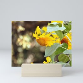 SUNFLOWER IN THE LATE AFTERNOON SUNLIGHT GLOW Mini Art Print