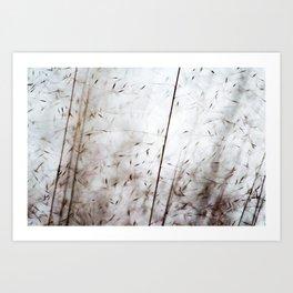 White pampas grass I Art Print