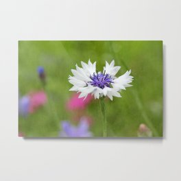 Bachelor's Button Metal Print
