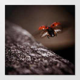 Ladybird in flight Canvas Print