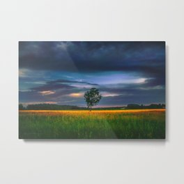 Lonely tree in the field Metal Print