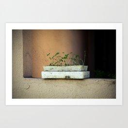 Seedlings Art Print