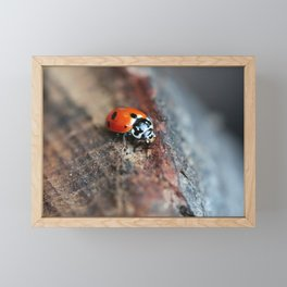 ladybug Framed Mini Art Print