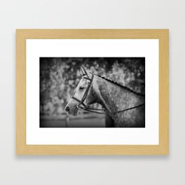Grey Show Horse in Black and White Framed Art Print