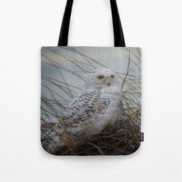 snowy owl in sand dunes Tote Bag