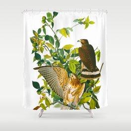 Broad Winged Hawk Shower Curtain