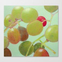Grapes #8 Canvas Print