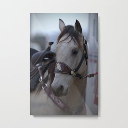 Horse in bridle Metal Print