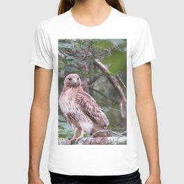 Hawk looking front T-shirt