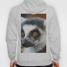 Ring tailed Lemur (Lemur catta) close up portrait Hoody
