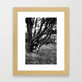 Resting On The Tree Framed Art Print