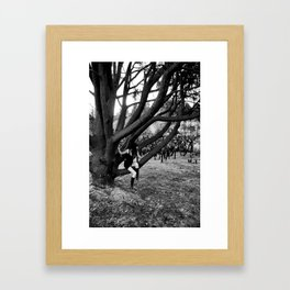 Resting On The Tree Framed Art Print