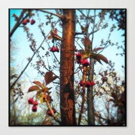berry Canvas Print