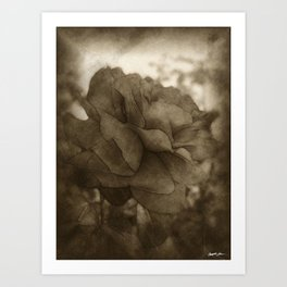 Red Rose Edges Antiqued Art Print