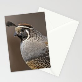 Male California Quail (Callipepla Californica) stands on a fence post near Point Reyes California. Stationery Cards
