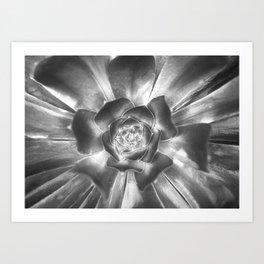 A Spiral of an Opening Succulent Art Print