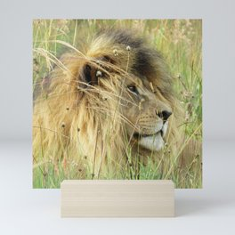Leo Panthera African lion Mini Art Print